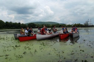SUNY Oneonta students remove water chestnutsin an Oneonta swamp.