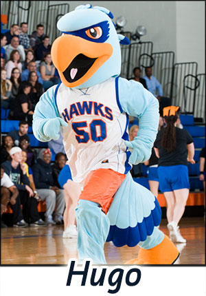 Hugo the Hawk from New Paltz at work at the game