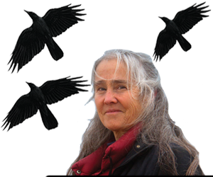 Crows flying and Anne Clark of Binghamton University