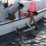 Tracking the Endangered Oceanic Whitetip Shark