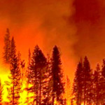 Ask an Expert: Why are wildfires good?