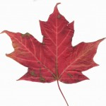 Ask an Expert: Why do leaves change colors?