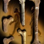 "Study: Six-million-year-old ""Millenium Man"" was bipedal—but lived in trees"