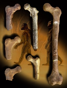 """Study Reveals an Early Tree-Dwelling Bipedal Human Ancestor was Similar to Ancient Apes and """"Lucy"""" but not Living Apes"""