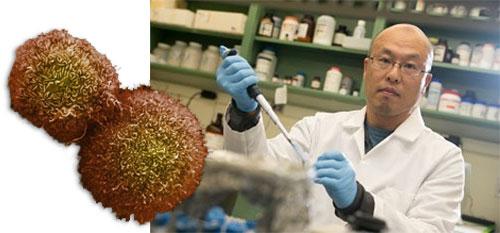 Nobuhide Ueki, Stony Brook researcher, and cancer cells