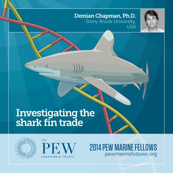 Cover of Chapman's report, Investigating the Shark Fin Trade