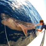 Marine Researcher Brings Shark Conservation to Incredible New Depths