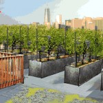 Rooftop Vineyard Coming To Brooklyn This Summer