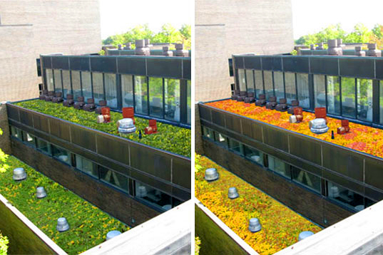 suny purchase rooftop seasons