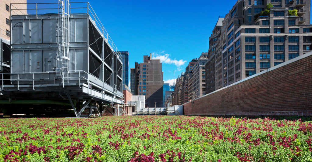 Rooftop garden at FIT in New York City.