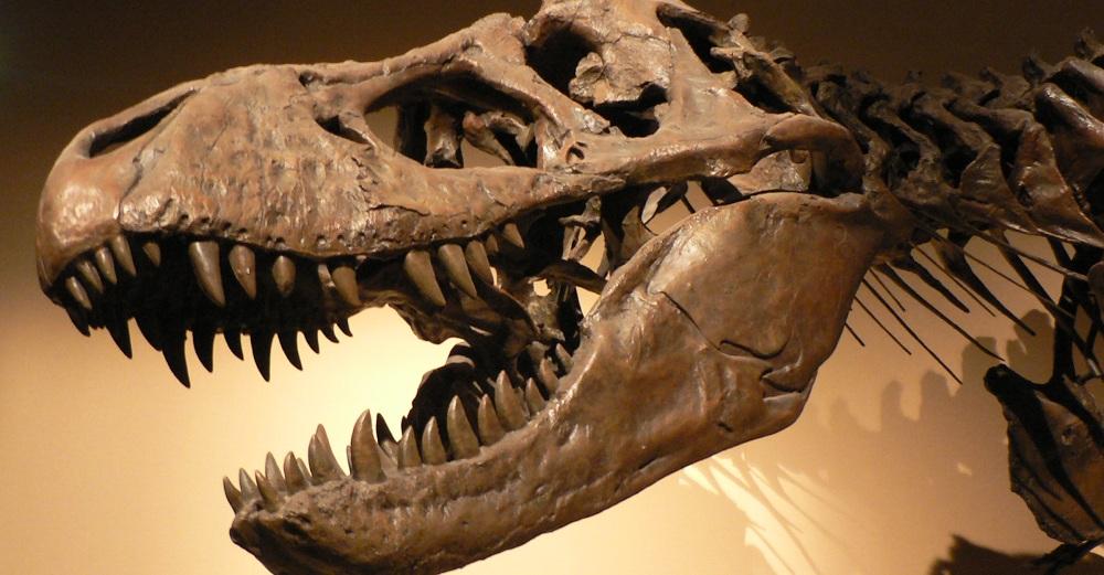 dinosaur head skeleton