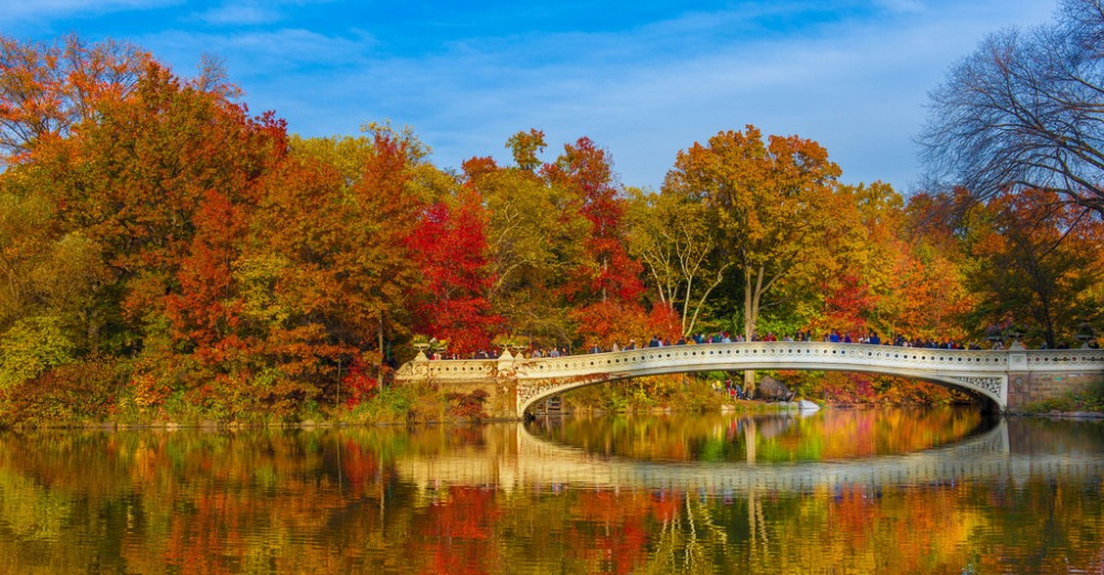 Fall folliage of colored leaves on trees behind a walking bridge over a river.