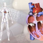 Replicating a Better Heart Cell to Improve Pre-Clinical Trials