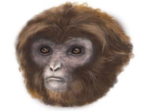 new primate