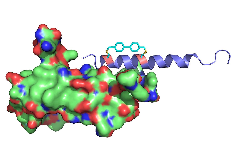 oxyntomodulin hormone