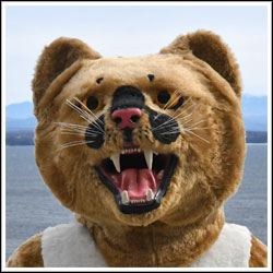 Clinton Community College mascot Calvin Cougar