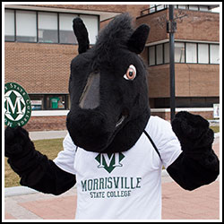 Morrisville State College - Mustang
