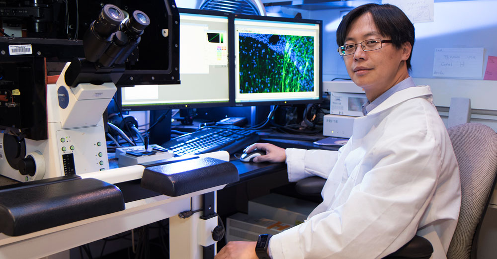 Downstate Medical Center professor Chang Chi Hsieh in his lab office char with large microscope and dual monitor computer in front of him.