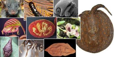 2017 top 10 new species