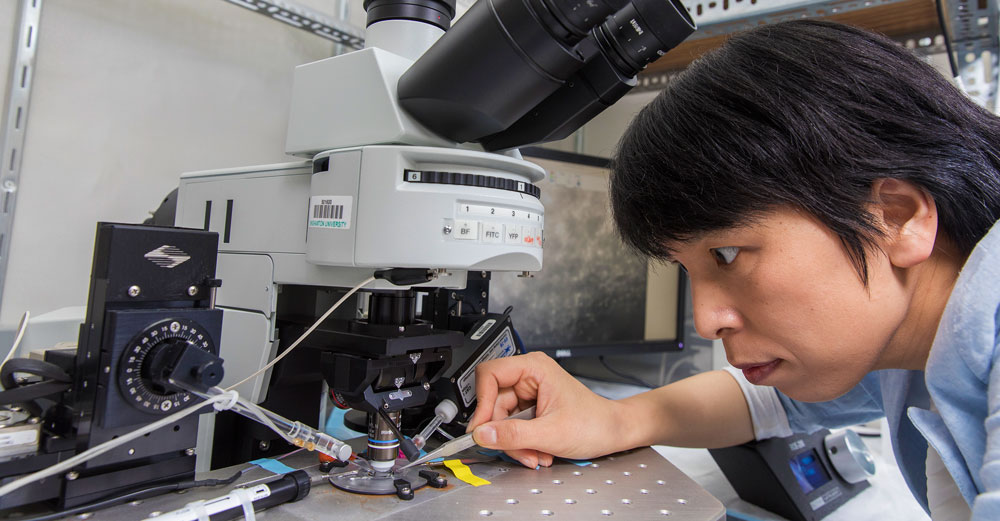 Binghamton University professor Yao-Ying Ma looks closely into powerful microsope wile holding a solution in medicine dropper.