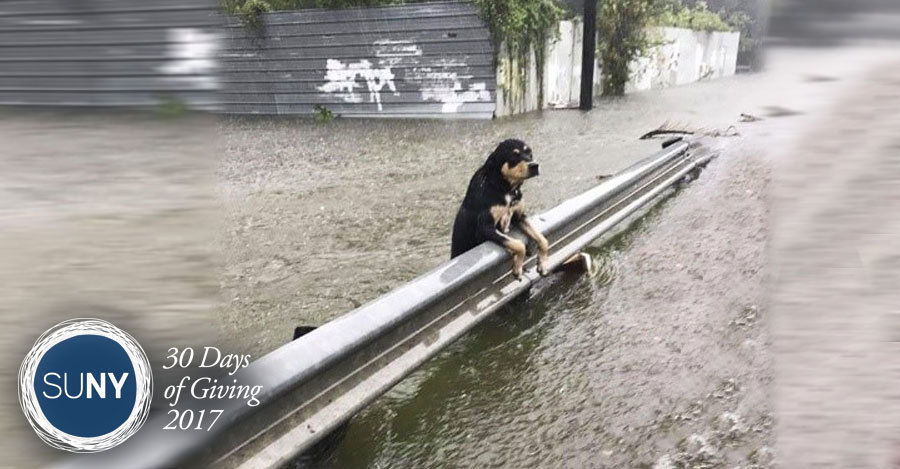 A dog stands leaning on a guard rail in rushing water.