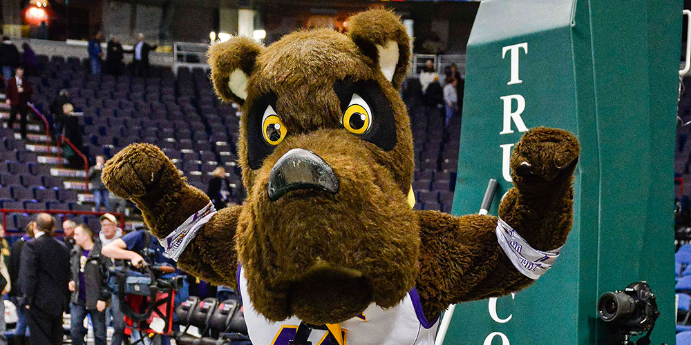 University at Albany mascot Damien the Dane stands under hoop on basketball court.