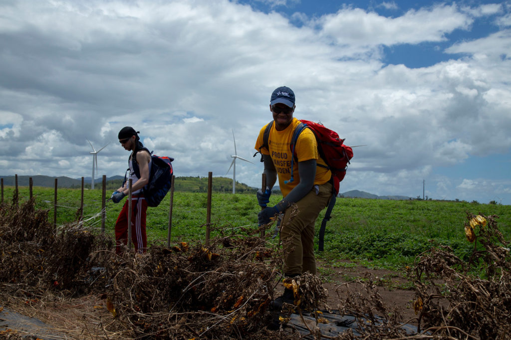 Two male SUNY Albany students uproot dirt in Puerto Rico