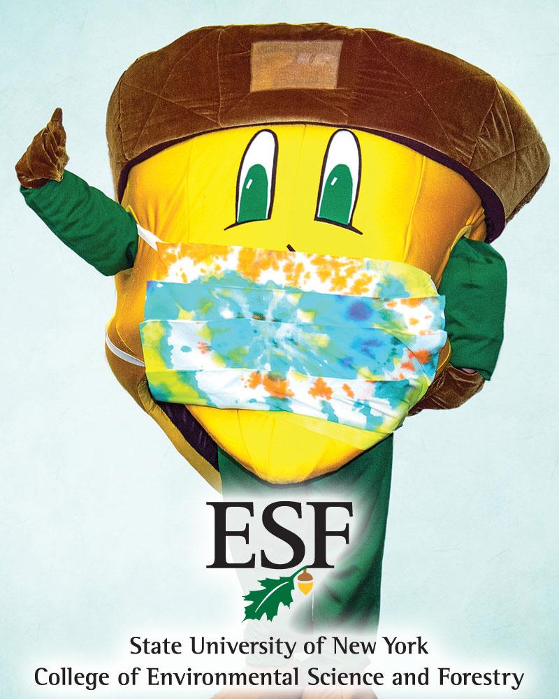 SUNY ESF mascot Oakie Acorn
